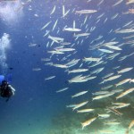 Diving in Thailand around Racha Yai and Racha Noi Islands.