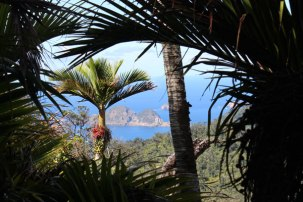 Nikau palms with Meyer Islands in the distance.