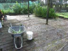 Trounson Kauri Park nursery after the clean up.