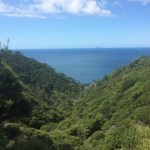 View from the Coromandel Coastal Walkway.