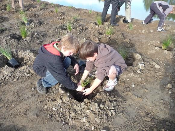 40 Waikanae School planting