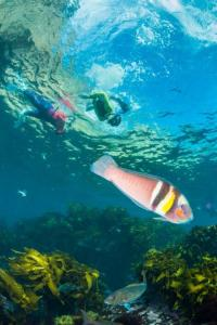 Observing life beneath the surface_credit darryl torckler (002)