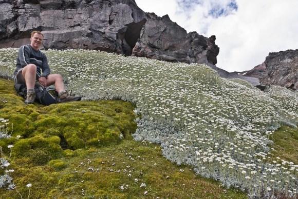 Ruapehu alpine flush survey, Feb 2012. Peter de Lange.