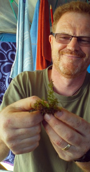 Peter de Lange holding up Hymenophyllum specimen from Prospect Peak 17 May 2011
