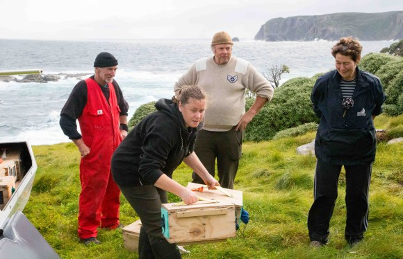 Russel Trow (Kaitiaki of Kundy) Ros Cole (Senior Ranger Biodiversity, Murihiku) Pete McClelland (ex DOC, contractor) and Teressa Trow (Kaitiaki of Kundy) loading saddlebacks for translocation off Kundy island to nearby Tia Island.