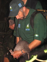 Rogan holding a little spotted kiwi.