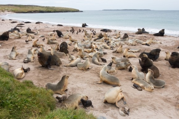 Sea lion colony.