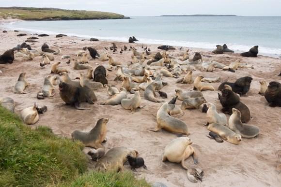 Sea lion colony.