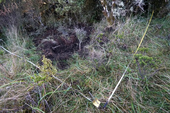 Pig damage in search plot. Photo: Anthony Behrens.
