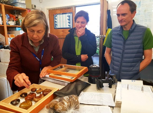 Kath and the team in Hokitika learning all about the different Powelliphanta species.