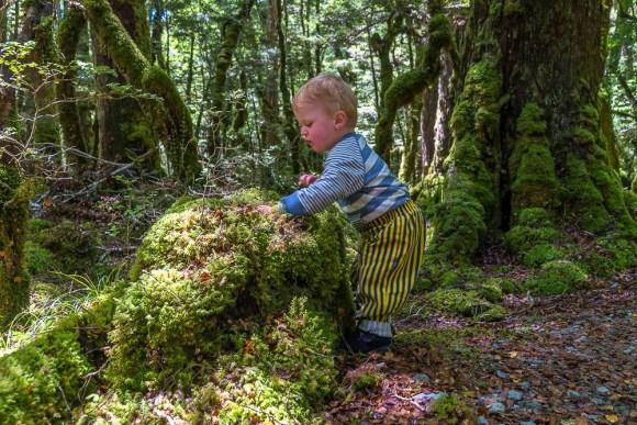 Fiordland - Lake Gunn Nature Walk - Martin Sliva