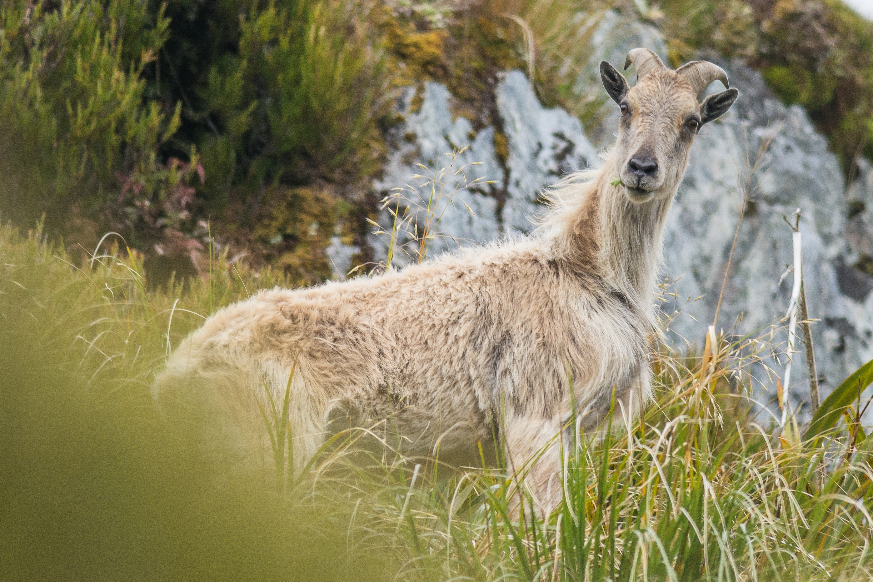 10 questions about tahr