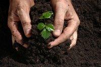 Se acelera (más) el crecimiento de los OMV
