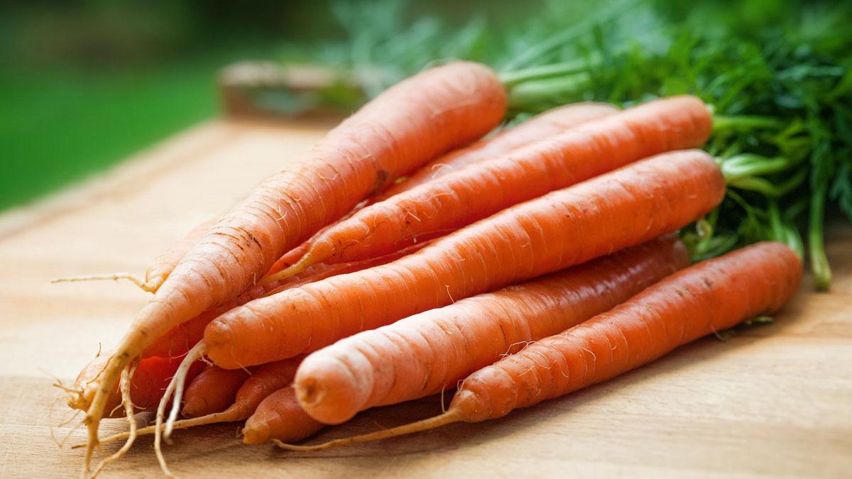 Zanahoria como alimento a incluir en la dieta de tu perro