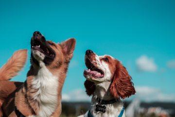To glade hunde i naturen med en blå himmel i baggrunden