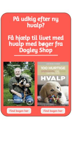 Bøger til hundehvalpetræning
