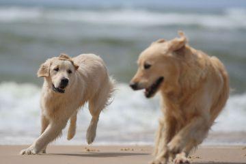 Hunde i sommervarmen