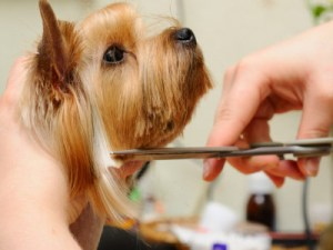 The Best Dog Grooming Tips for New Pet Owners!