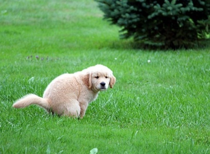 Best Potty Training Tips for New Pet Owners!
