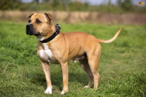Which Dog Breed to Buy?