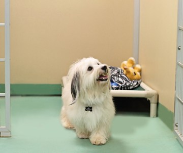 Picking the right dog boarding center