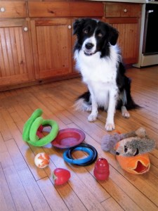 Things to have in a dog owner's home