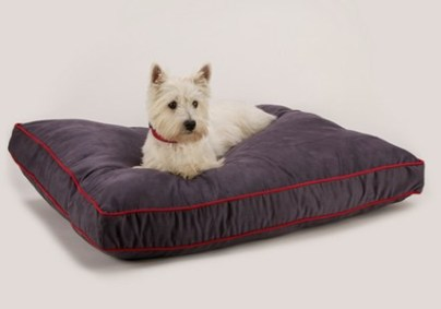 Getting branded Pet dog products for better results
