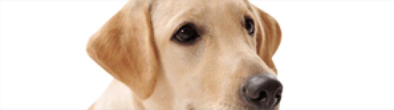 pet dog supplies