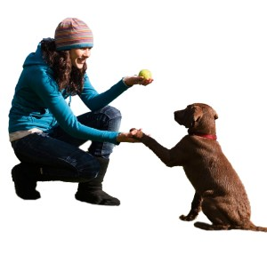 Training your Loved Pet to Behave!