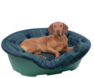 A DOG – TO BUY OR NOT IS THE QUESTION