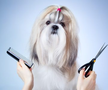 Groom your Dog with Latest Technology – On Demand Dog Grooming App