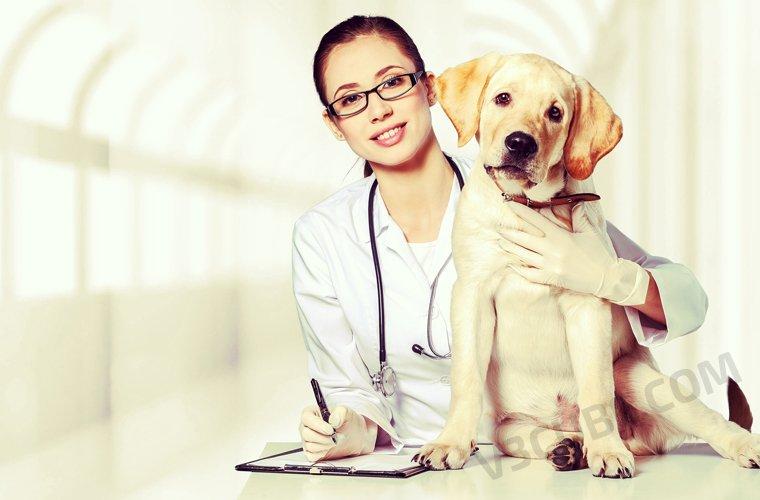 Smartphones to Pet Rescue!