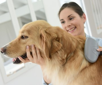 Can I Groom My Dog At Home?