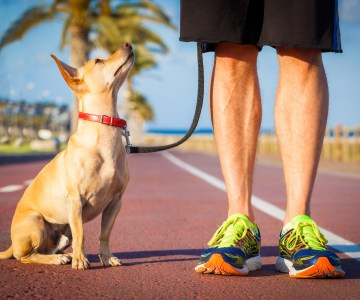 Affordable Business to Start: Dog Walking Services