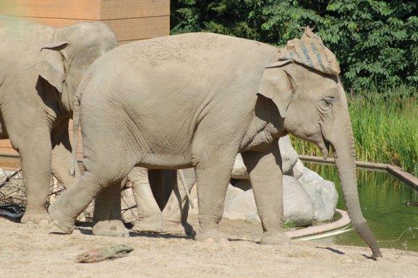 elefanter-1