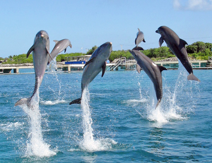 https://i2.wp.com/blog.dolphindiscovery.com/wp-content/uploads/2009/09/dolphinsjumping.jpg