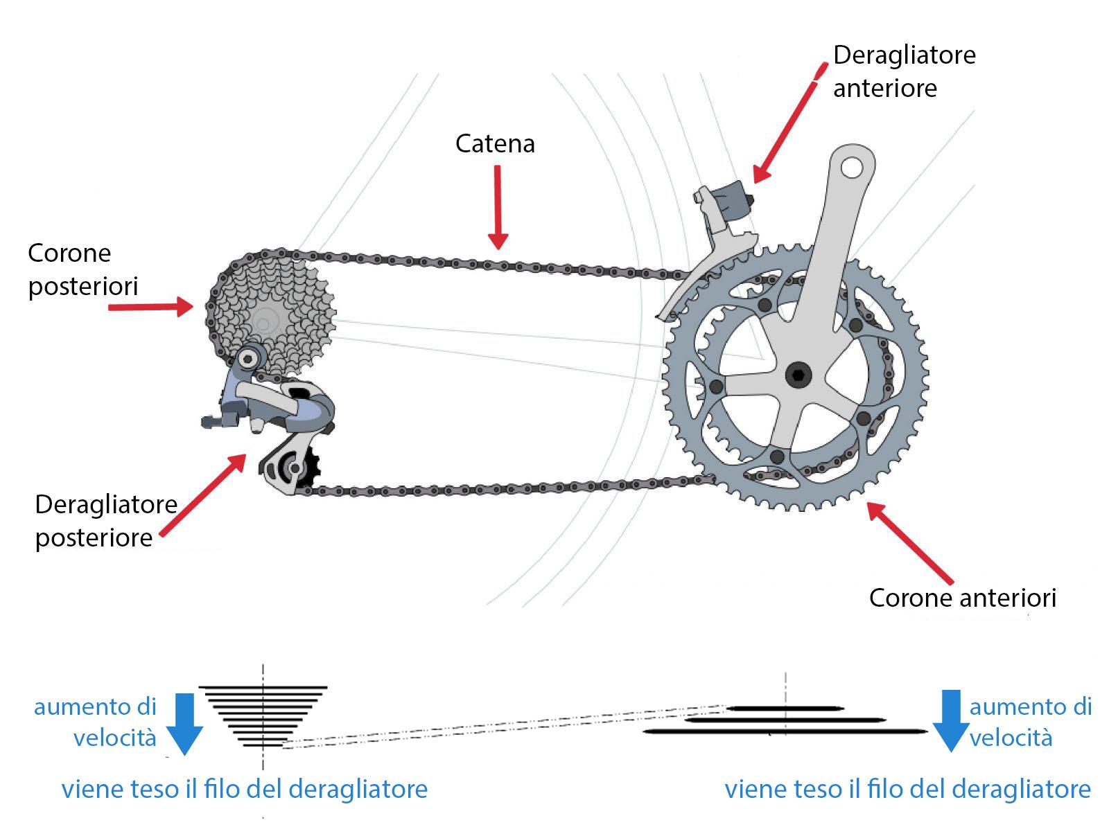 2 - Anatomia e funzionamento del cambio di velocità in una bicicletta