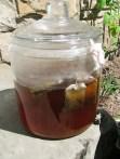 Brewing Sun Tea