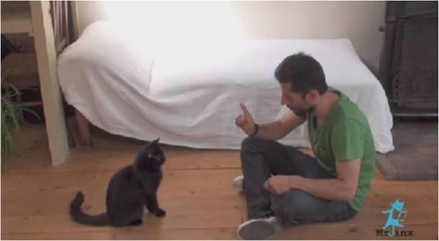 Katten kunstjes leren kan echt!