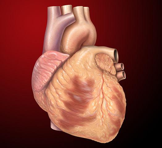 Hoe ons hart emoties beïnvloedt