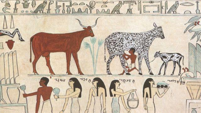 Hoe dieetveranderingen van onze voorouders hebben bijgedragen aan de klanken van onze taal