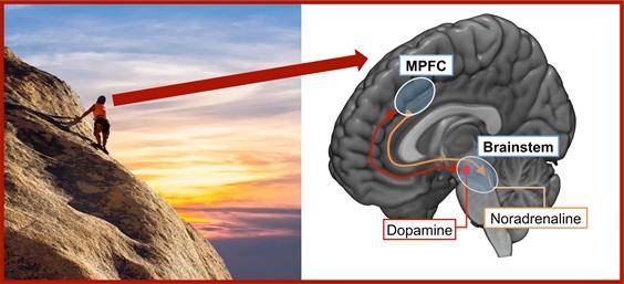 Hoe het brein leert beter zijn best te doen