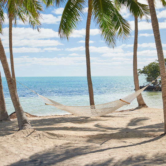 A hammock sits between two palm trees with an ocean view in the back.
