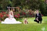 cainele-la-nunta