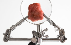 A piece of meat is examined through a magnifying glass on a stand.