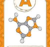 Adenine molecule marked with an A.