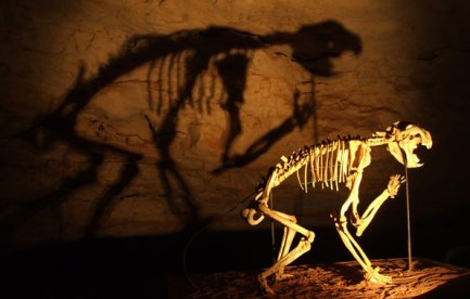 Marsupial lion skeleton. It casts its shadow on the back wall.