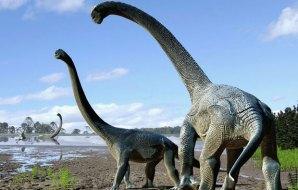 Wwo large sauropod dinosaurs on the shore of a lake.