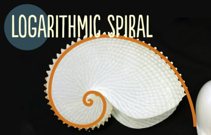 A white spiral shell, with a mthematical spiral drawn over the top.