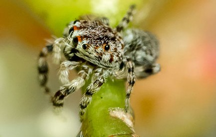 A small, furry spider.